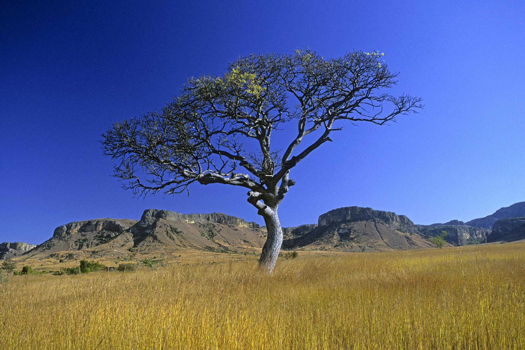 Photo madagascar paysage de savane et massif de l 39 isalo - Felin de la savane ...