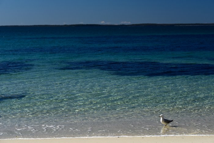 Jervis Bay (New South Wales, Australie) - Plage avec mouette(VO-17-0403)