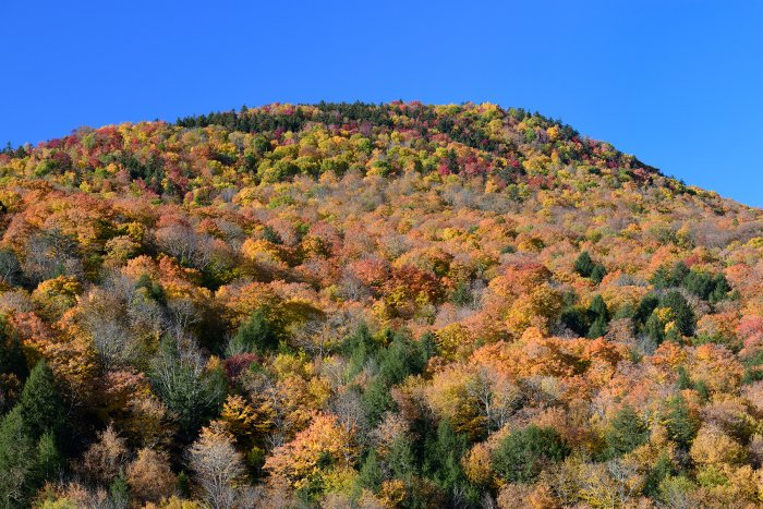Stowes Mountain (Vermont, USA) - Montagne couverte d'érables multicolores(VO-19-2210)