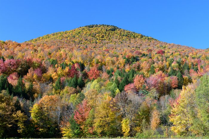 Stowes Mountain (Vermont, USA) - Montagne couverte d'érables multicolores(VO-19-2227)