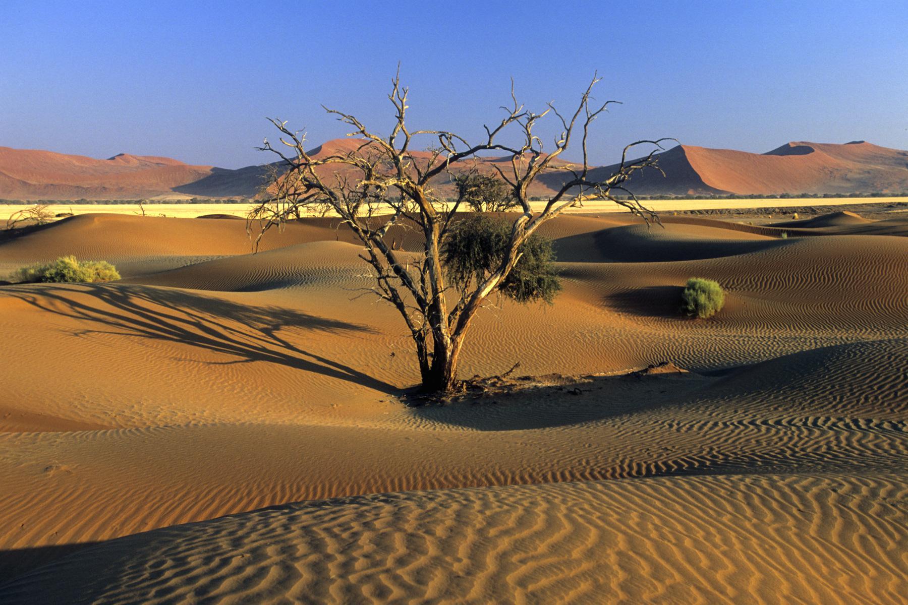 désert paysage
